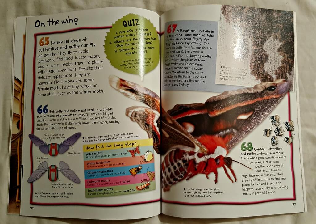 100 facts about butterflies and moths page illustrations of a moth