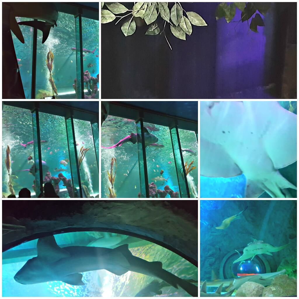 blackpool really does have it all part 2 pictures of sealife blackpool