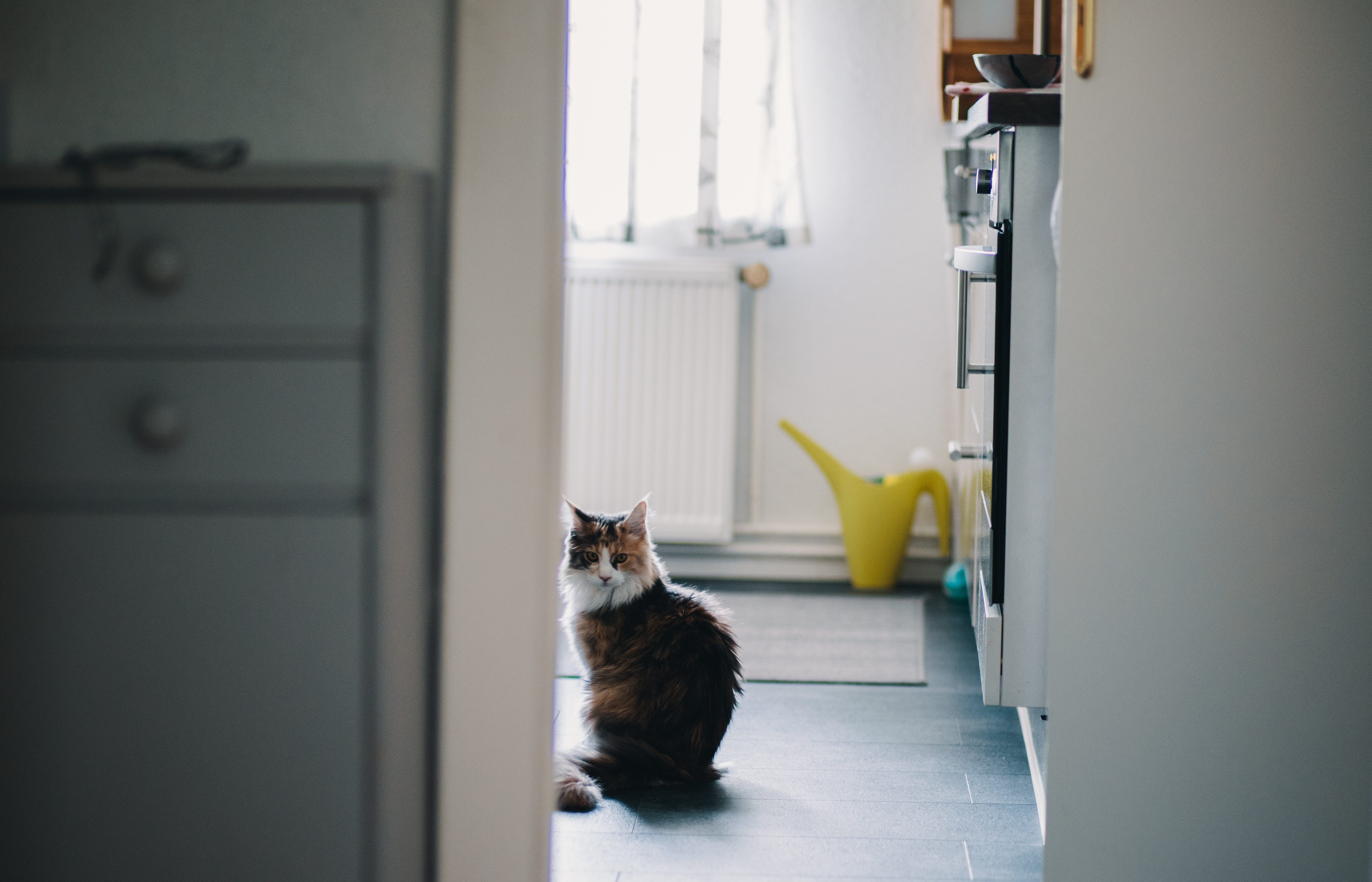 consider underfloor heating for your home picture of a cat in a room
