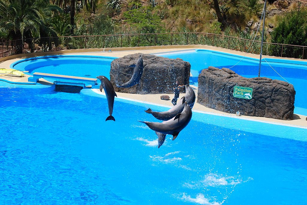 dolphin show at palmitos park