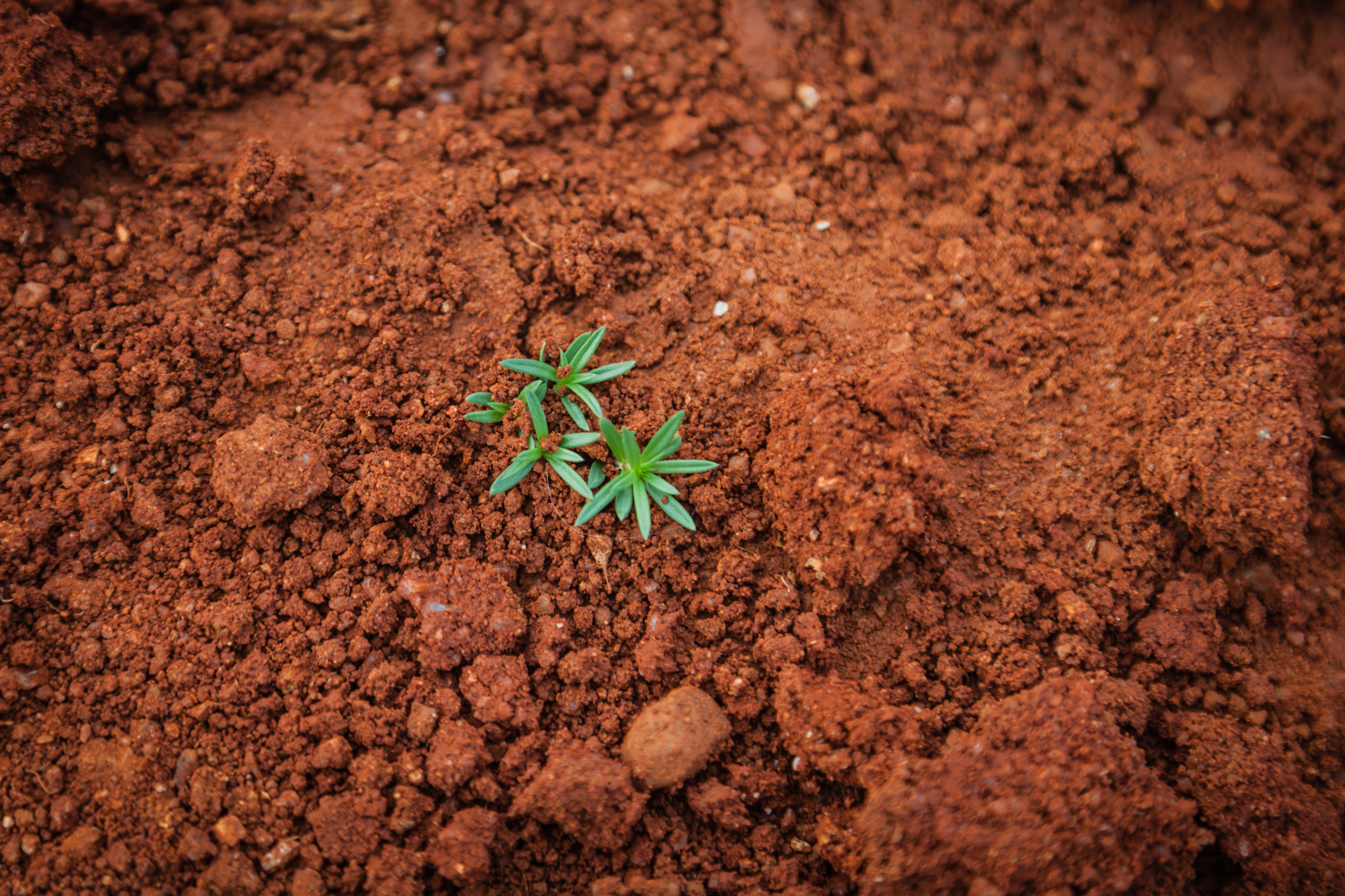 brown soil with small plants beginning to grow