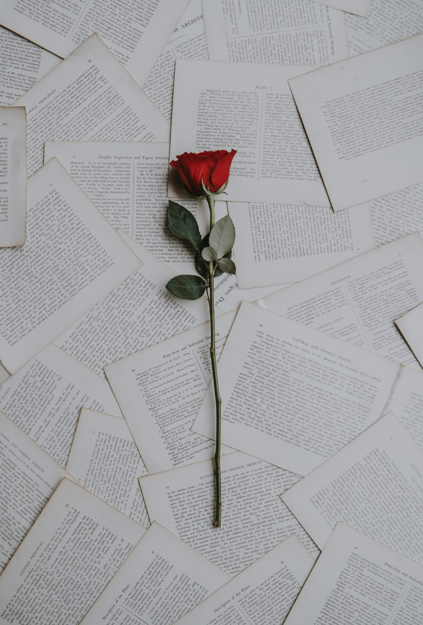 single red rose lying on book pages